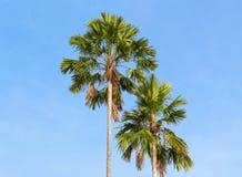 Palmen op een achtergrond van blauwe hemel Stock Afbeelding