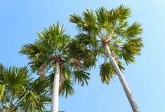 Palmen op een achtergrond van blauwe hemel Royalty-vrije Stock Foto's