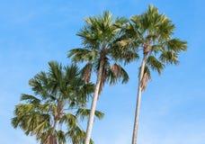 Palmen op een achtergrond van blauwe hemel Stock Fotografie