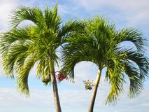 Palmen op een blauwe achtergrond Stock Foto