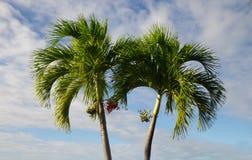 Palmen op een blauwe achtergrond Stock Foto's