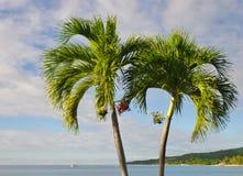 Palmen op een blauwe achtergrond Stock Afbeeldingen
