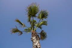 Palmen op een blauwe hemel en ble een hemelachtergrond, Royalty-vrije Stock Fotografie