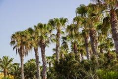 Palmen op een blauwe hemel en ble een hemelachtergrond, Stock Fotografie