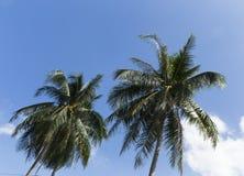 Palmen op een blauwe hemelachtergrond Stock Foto