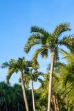 Palmen op een blauwe hemelachtergrond Mexico, Riviera Maya Stock Foto's