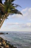 Palmen op een duidelijke zonnige dag bij het strand Stock Foto's