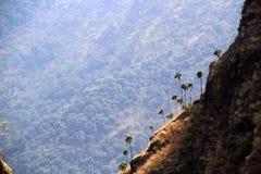 Palmen op een helling van het Himalayagebergte Stock Foto's