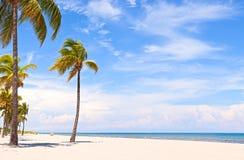 Palmen op een mooie zonnige de zomermiddag Royalty-vrije Stock Foto