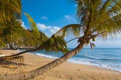 Palmen op een Strand Stock Foto's