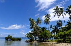 Palmen op een strand, het eiland van Vanua Levu, Fiji Stock Foto