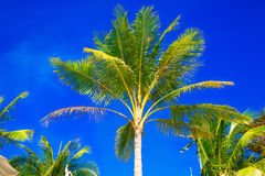 Palmen op een tropisch strand, de hemel op de achtergrond Summe Stock Fotografie
