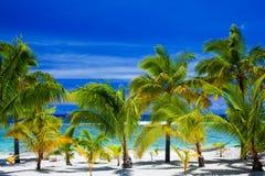 Palmen op een verbazende strandvoorzijde Stock Afbeelding