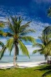Palmen op een Wit Strand Royalty-vrije Stock Foto's