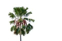 Palmen op een witte achtergrond met het knippen van weg stock fotografie