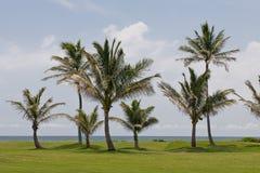 Palmen op golfcursus royalty-vrije stock fotografie