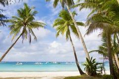 Palmen op hemel en overzeese achtergrond Royalty-vrije Stock Afbeeldingen