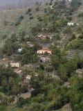 Palmen op het eiland van La Gomera royalty-vrije stock afbeeldingen