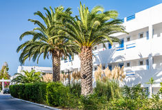 Palmen op het grondgebied van hotel Stock Afbeeldingen