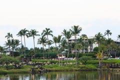 Palmen op het Meer Royalty-vrije Stock Afbeeldingen