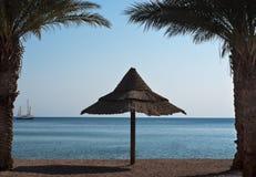 Palmen op het noordelijke strand van Eilat stad, Israël Royalty-vrije Stock Foto