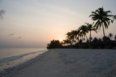 Palmen op het ochtendstrand Stock Foto's