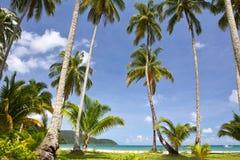Palmen op het strand Stock Fotografie