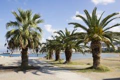 Palmen op het strand Stock Foto's