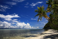 Palmen op het strand Stock Foto