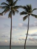 Palmen op het strand Royalty-vrije Stock Foto's