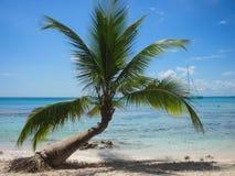 Palmen op het strand Stock Afbeelding