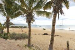 Palmen op het Strand bij Aap Mia Shark Bay Stock Foto