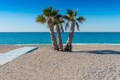 Palmen op het Strand bij La Herradura Stock Fotografie