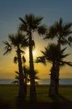 Palmen op het strand bij zonsopgang Stock Foto's