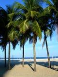 Palmen op het strand Copacabana Stock Afbeelding