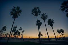 Palmen op het strand in een zonsonderganglicht in Venice Beach, Californië stock foto