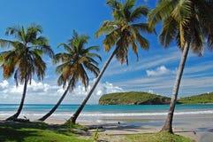 Palmen op het strand van La Sagesse op het Eiland van Grenada Royalty-vrije Stock Foto's