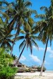 Palmen op het strand van Zanzibar Stock Fotografie