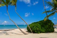 Palmen op het tropische strand Stock Afbeelding