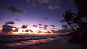 Palmen op het tropische strand bij zonsopgang, video stock videobeelden