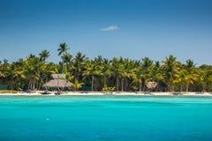 Palmen op het tropische strand, Dominicaanse Republiek royalty-vrije stock afbeelding