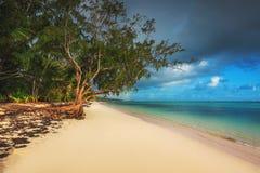 Palmen op het tropische strand, Dominicaanse Republiek Het Eiland van Saona royalty-vrije stock afbeeldingen