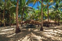 Palmen op het tropische strand Het Eiland van Saona royalty-vrije stock foto