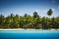Palmen op het tropische strand, Saona-Eiland, Dominicaanse Republ royalty-vrije stock afbeelding