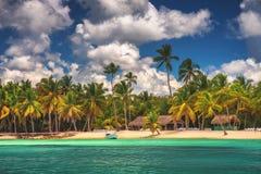 Palmen op het tropische strand, Saona-Eilandreserve, Dominicaanse Republiek royalty-vrije stock fotografie