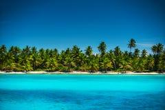 Palmen op het tropische strandeiland Saona, Dominicaanse Republiek stock foto
