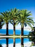 Palmen op overzeese achtergrond met bezinning in een water Stock Fotografie