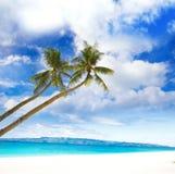 Palmen op overzeese en strandachtergrond Stock Afbeeldingen