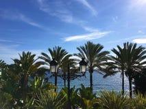 Palmen op overzeese kust Stock Afbeeldingen