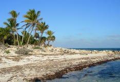 Palmen op overzeese kust in de Caraïben Stock Afbeeldingen